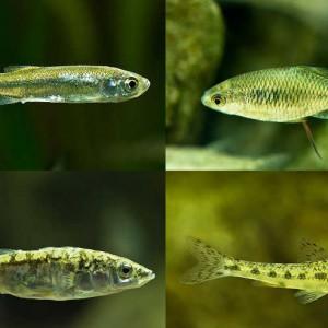 Fische im gartenteich mit naturagart teiche planen for Fische im gartenteich