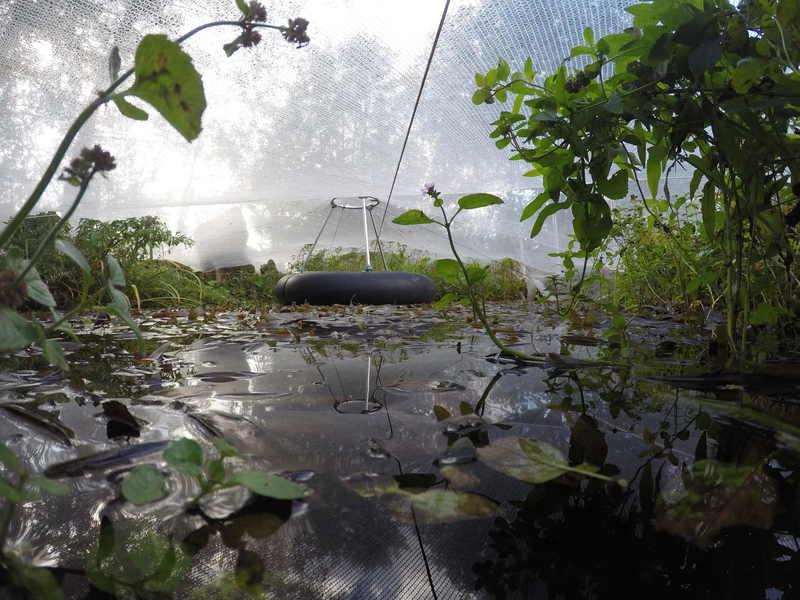 Teichpflege mit naturagart teiche planen bauen und for Fischteich wasser reinigen
