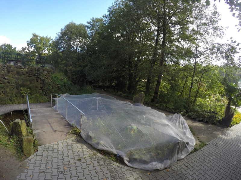 Vorsorge im herbst den teich rechtzeitig abdecken for Gartenteich pflege