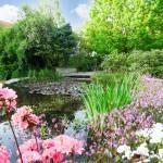 wasserpflanzen-gartenteich-naturagart-1