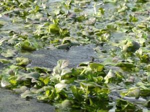Wie wirkt sich der Winter auf Teichpflanzen aus? Die Pflanzenberater helfen bei Fragen weiter
