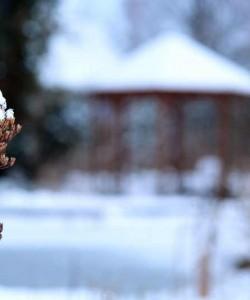 Dieser November ist mild, doch der nächste Frost kommt bestimmt.